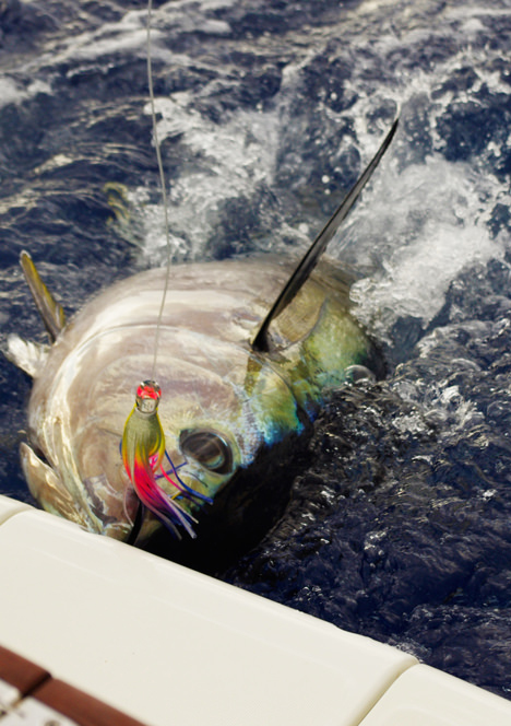 Home big game fishing madeira island for Tuna fishing games